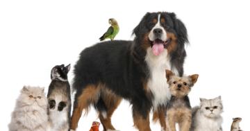 Haustiere helfen Steuern sparen